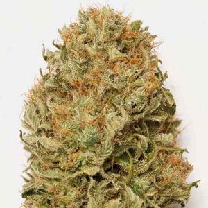 Blue Dream Auto Granel